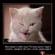 Кошачьи демки